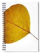 Leaves Ten  Spiral Notebook