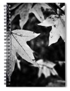 Leaves Without Color Spiral Notebook