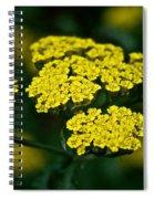 Lemon Lace Spiral Notebook