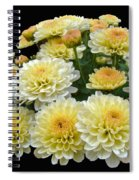 Lemon Meringue Chrysanthemums Spiral Notebook