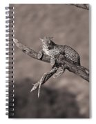 Leopard Panthera Pardus In A Tree Spiral Notebook