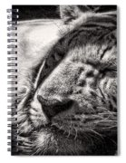 Let Sleeping Tiger Lie Spiral Notebook