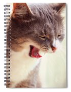 Lets Go Sleeping. Kitty Time Spiral Notebook