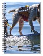 Let's Surf Dude Spiral Notebook