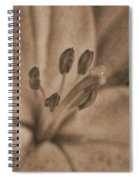 Lilly Old World Spiral Notebook