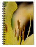 Lily - Flower - Fore And Aft Spiral Notebook