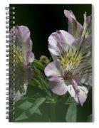 Lily - Liliaceae 3 Spiral Notebook
