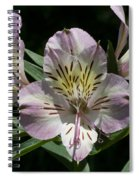 Lily - Liliaceae Spiral Notebook