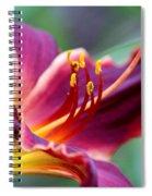 Lily - Hardy Spiral Notebook