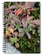 Lime Stonecrop  Leaves In Winter Spiral Notebook