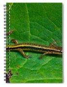 Lined Salamander 2 Spiral Notebook