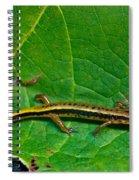 Lined Salmander 1 Spiral Notebook