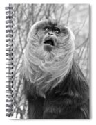 Lion Tailed Macaque Spiral Notebook
