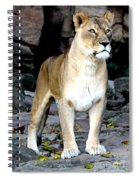 Lioness At Attention Spiral Notebook