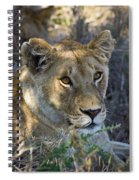 Lioness With Pride In Shade Spiral Notebook