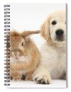 Lionhead-cross Rabbit And Golden Spiral Notebook