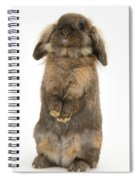 Lionhead Rabbit Spiral Notebook