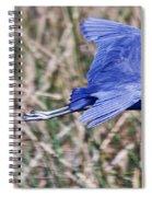 Little Blue Heron In Flight Spiral Notebook