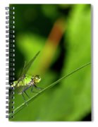 little Green wings Spiral Notebook