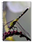 Little Green Wings Three Spiral Notebook