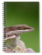 Little Komodo Spiral Notebook