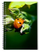 Little Lady Spiral Notebook