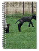 Little Lamb Playing Spiral Notebook