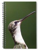 Little Princess - Hummingbird Spiral Notebook