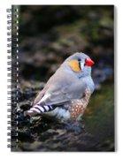 Little Red Beak Spiral Notebook