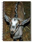 Little Stinker Skunk Back Kid Spiral Notebook