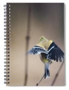 Little Wings Spiral Notebook