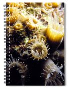 Live Coral Feeding At Night Spiral Notebook