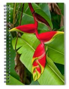 Lobster Claw Heliconia Spiral Notebook