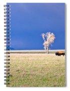 Lone Buffalo 3 Spiral Notebook