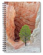 Lone Tree At Bryce National Park Spiral Notebook
