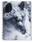 Lone Wolf In Snow Spiral Notebook