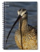 Long-billed Curlew Portrait Spiral Notebook