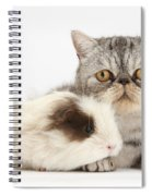 Long-haired Guinea Pig And Silver Tabby Spiral Notebook