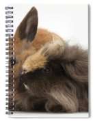 Long-haired Guinea Pig And Young Rabbit Spiral Notebook