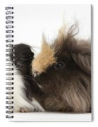 Long-haired Guinea Pigs Spiral Notebook
