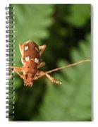 Long-horned Beetle In Flight Spiral Notebook