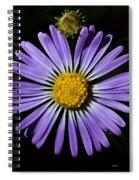 Long Leaved Aster Spiral Notebook