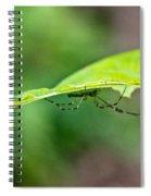 Long Leg Spider Spiral Notebook