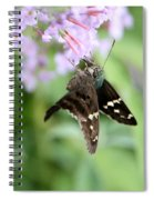 Long Tailed Skipper - Urbanus Proteus Spiral Notebook