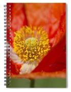 Longhorned Grasshopper Nymph On Orange Poppy Spiral Notebook