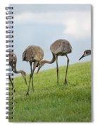 Look What I Found Spiral Notebook