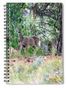 Looking Both Ways Spiral Notebook