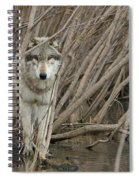 Looking Wild Spiral Notebook