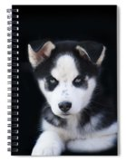 Lop Eared Siberian Husky Puppy Spiral Notebook