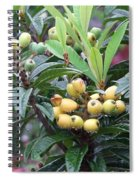 Loquats In The Rain Spiral Notebook